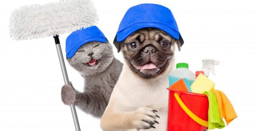 rengöringsmedel för fläckar från katt och hund